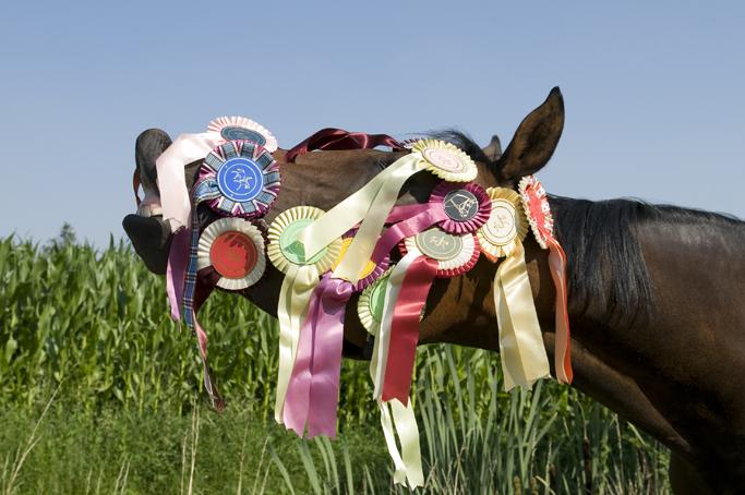 paard_DSC7199 72